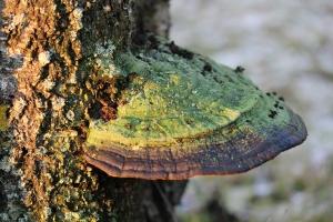 Mushroom with lichen